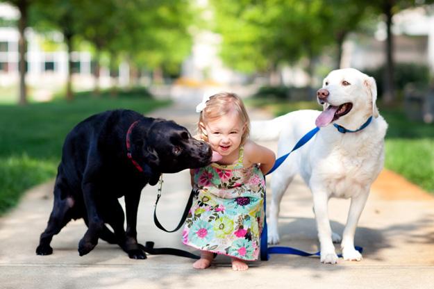labrador retriever e crianças