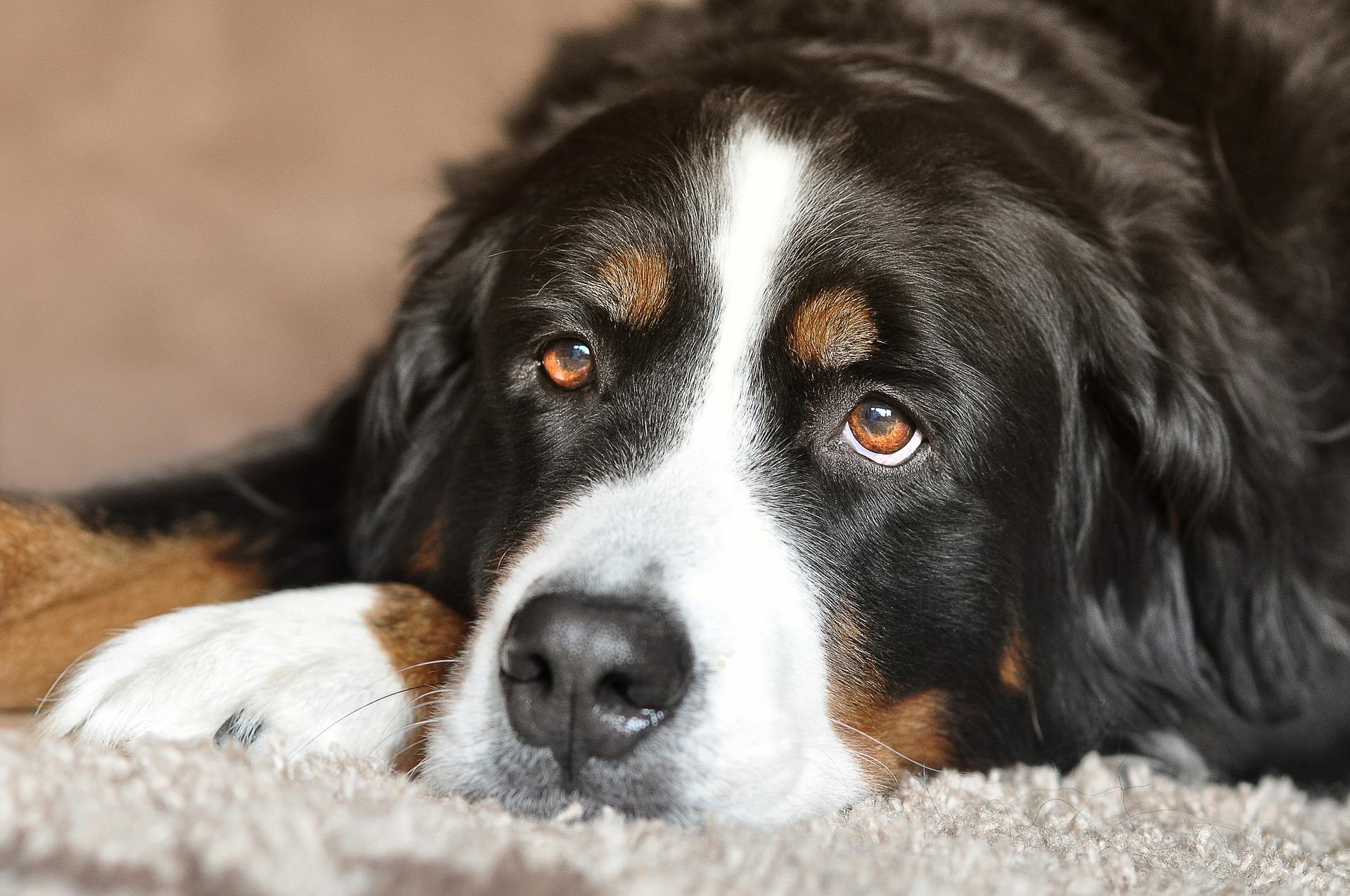 Castração de Cachorro 6