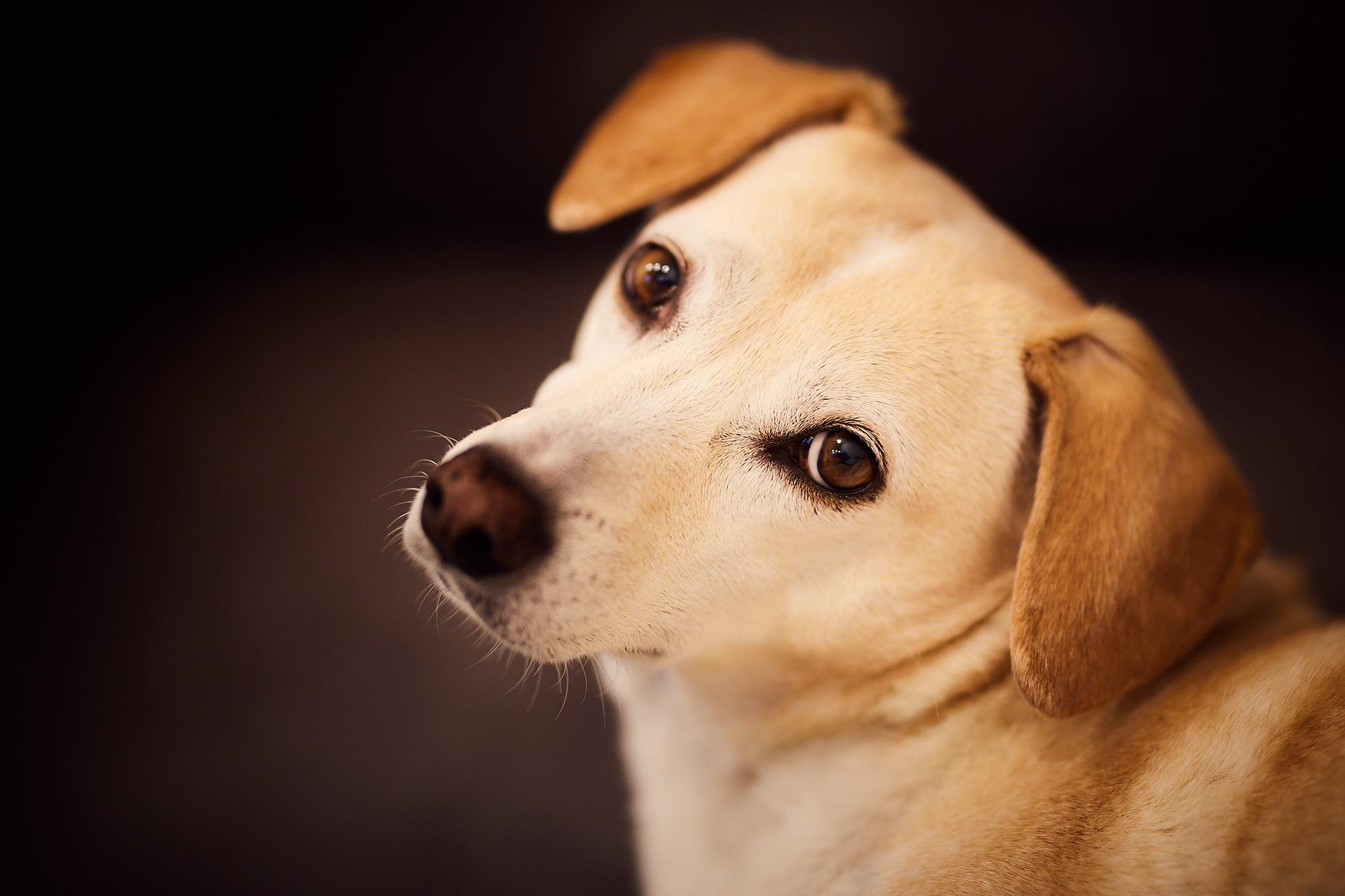Riscos da Castração de Cachorro