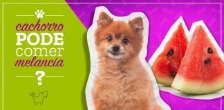 cachorro pode comer melancia