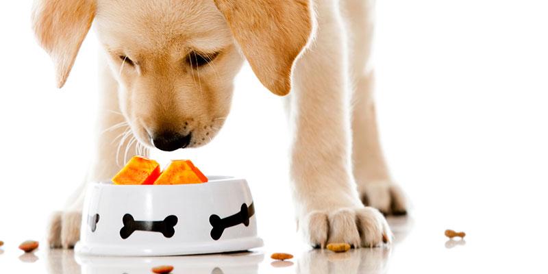 Cachorro pode comer mamão 2