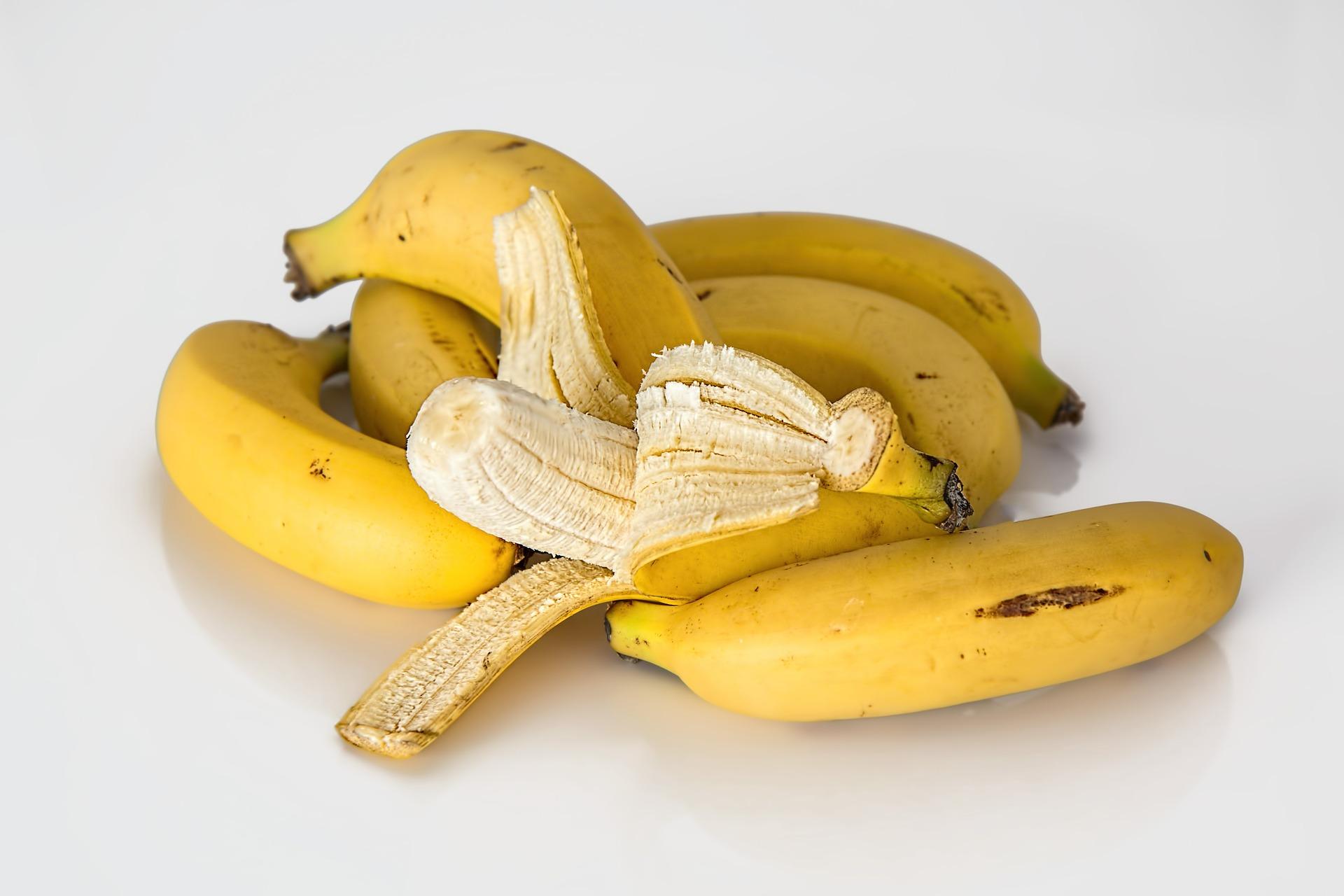 cachorro pode comer banana 2
