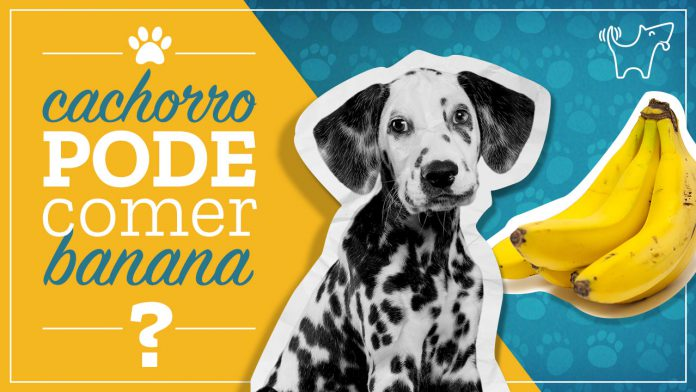 cachorro pode comer banana