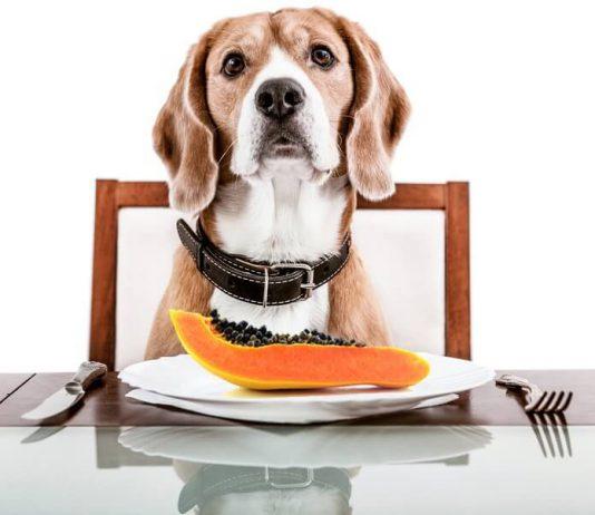 Cachorro Pode Comer Mamão 1