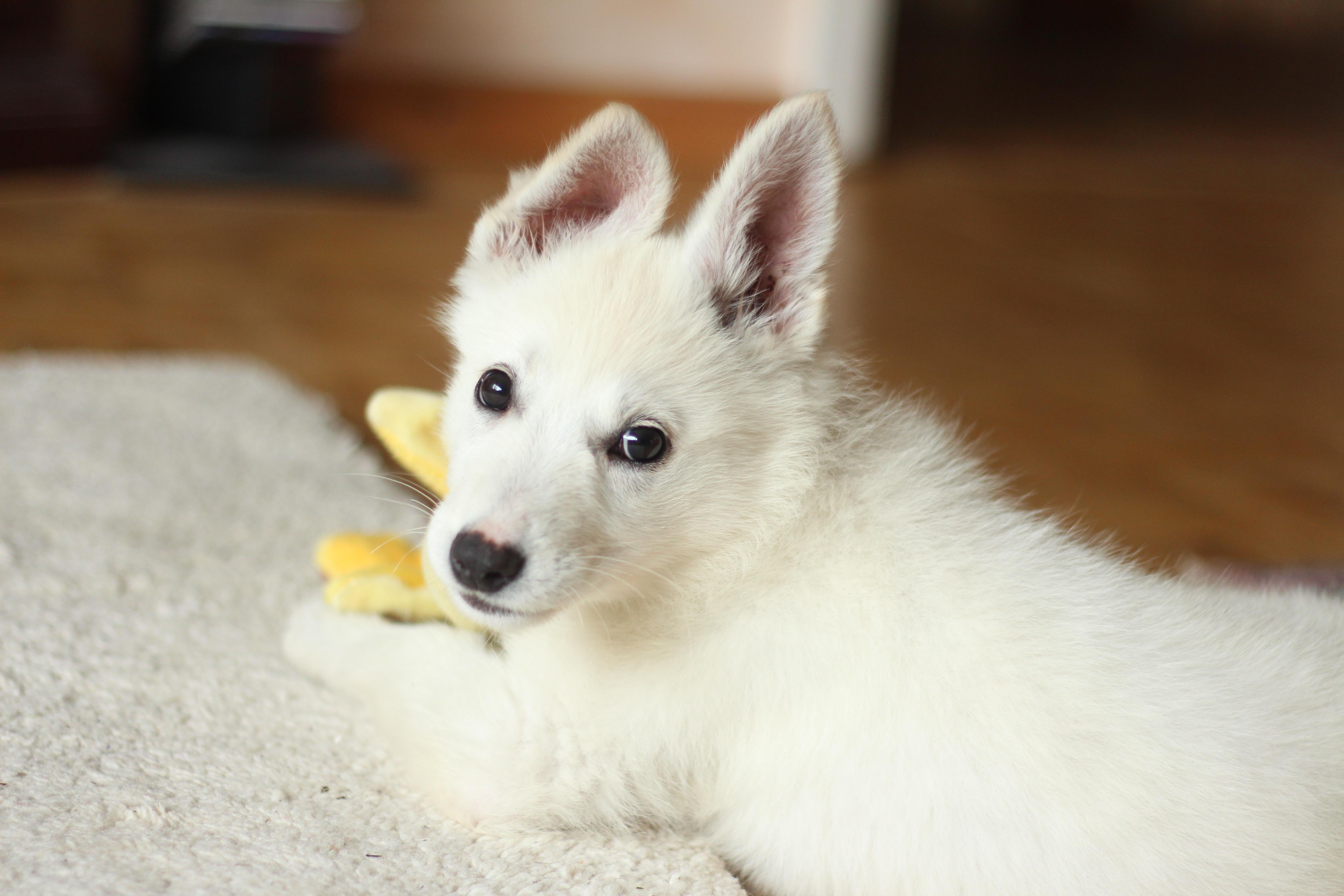 cachorro pode comer banana 3