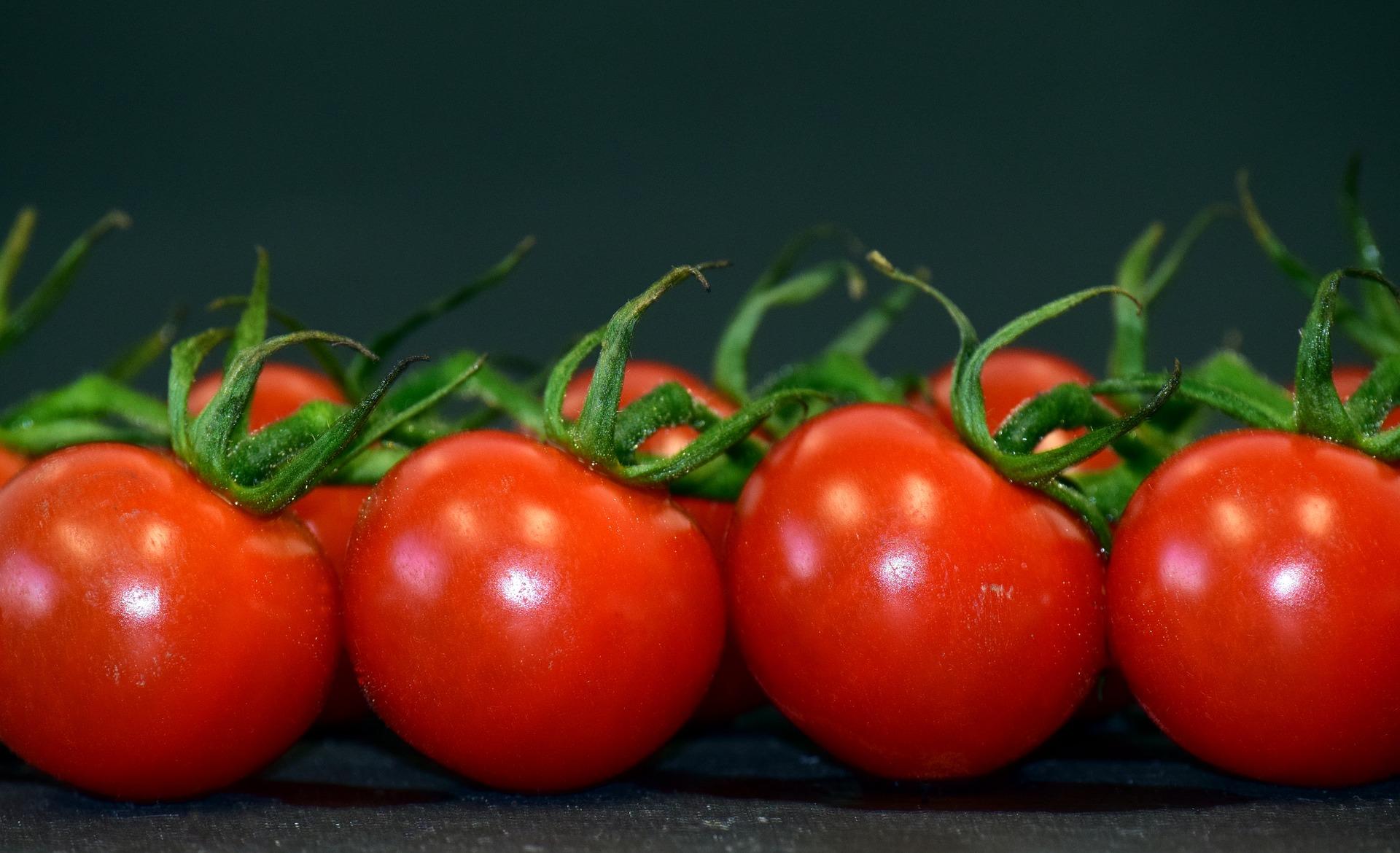 cachorro pode comer tomate 2