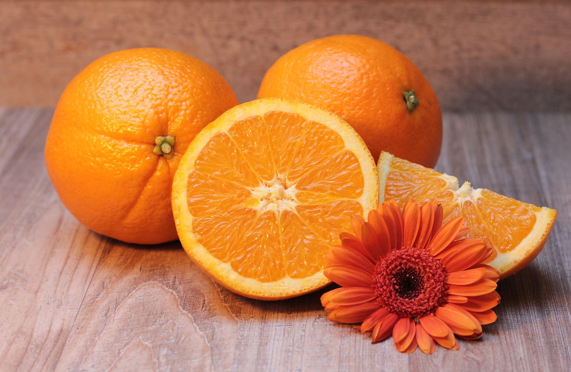 cachorro pode comer laranja 3