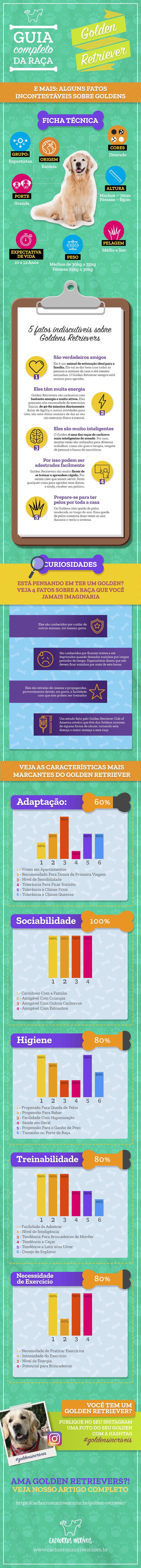 infográfico golden retriever