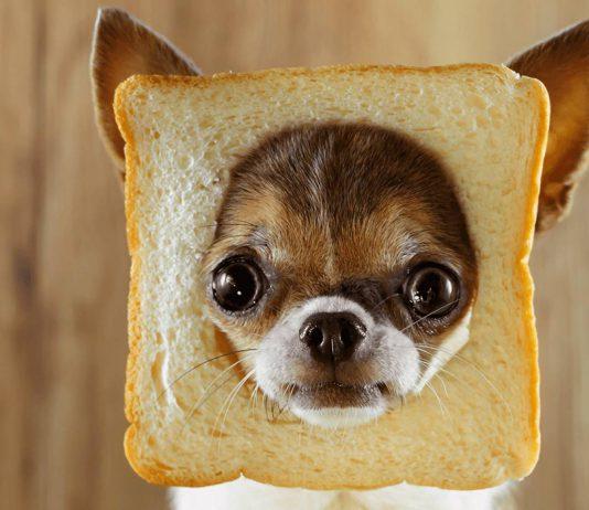 Cachorro pode comer pão 1