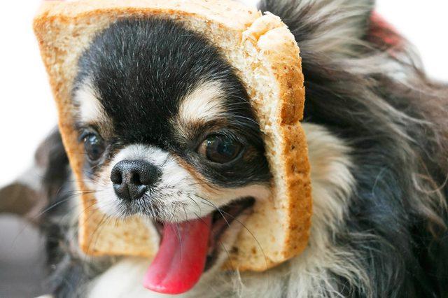 Cachorro pode comer pão 3