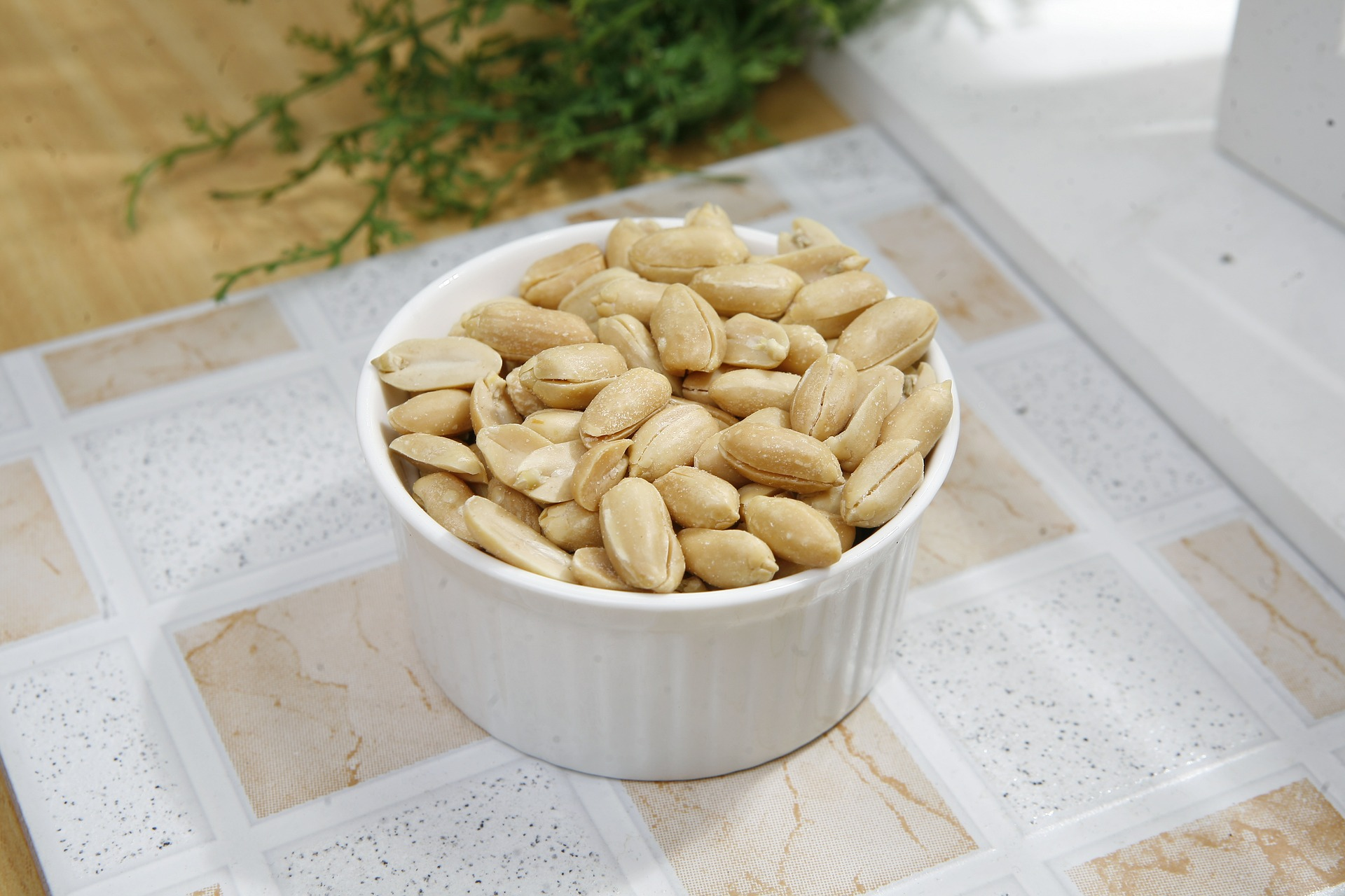 cachorro pode comer amendoim 2