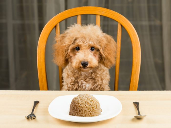cachorro pode comer arroz 1