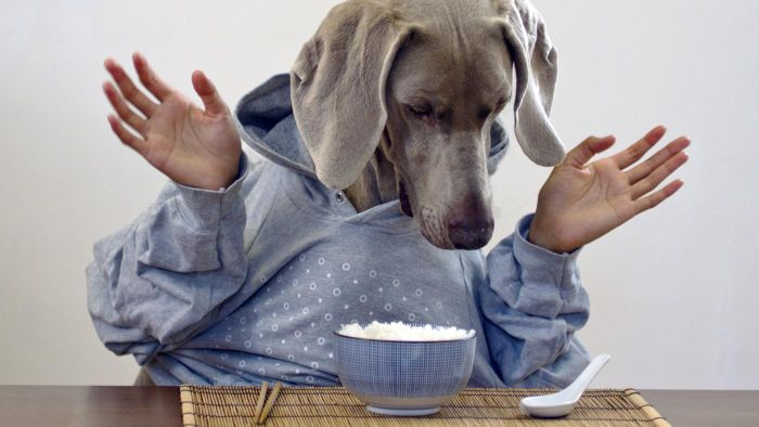 cachorro pode comer arroz