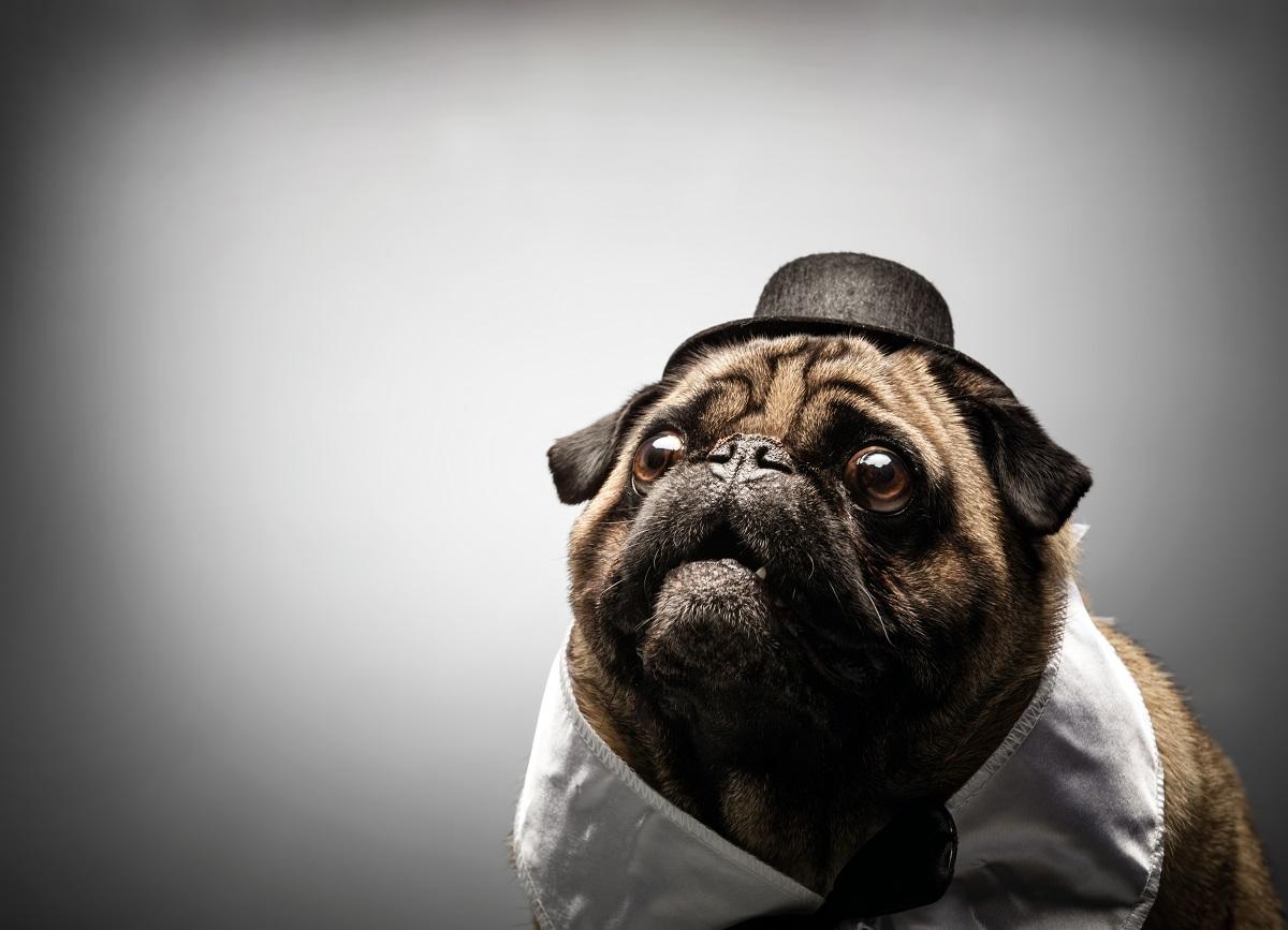 cachorro pode comer beterraba 2