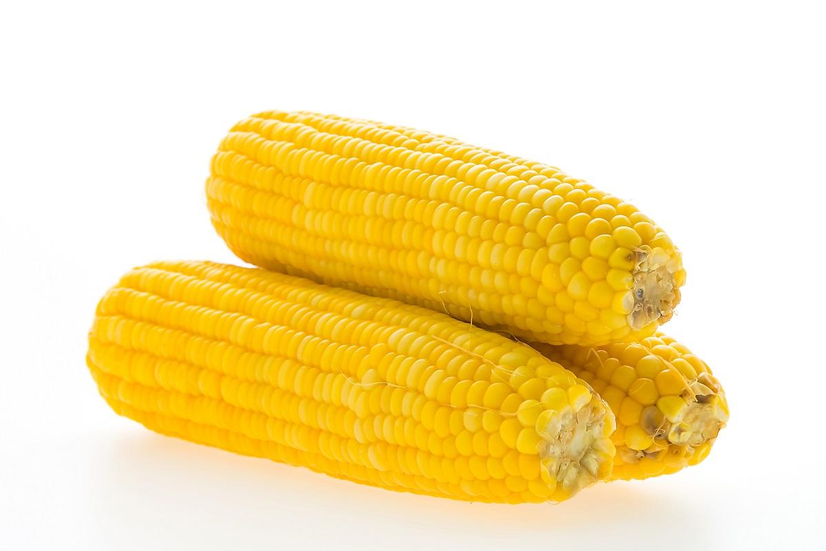 cachorro pode comer milho 2