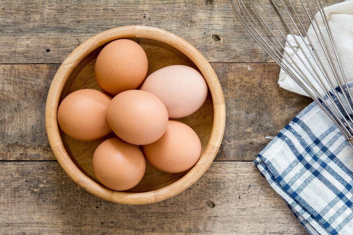 cachorro pode comer ovo 3