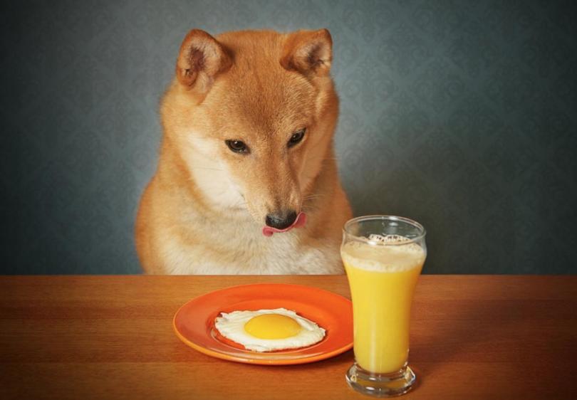 cachorro pode comer ovo 2