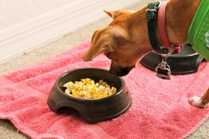 cachorro pode comer ovo 5