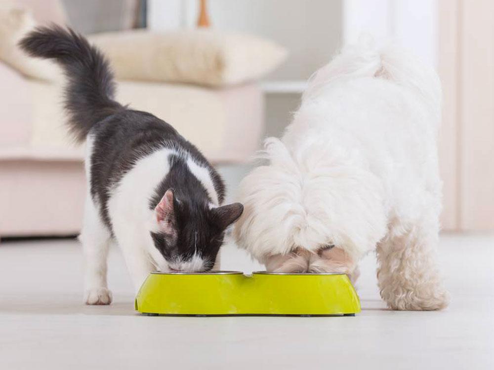 cachorro pode comer ração de gato 3