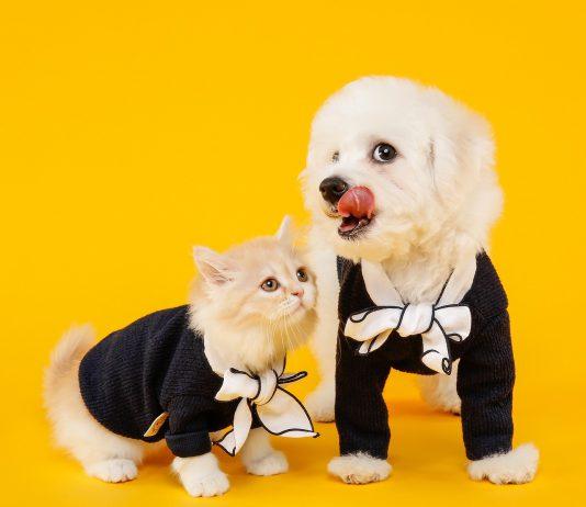 cachorro pode comer ração de gato 1