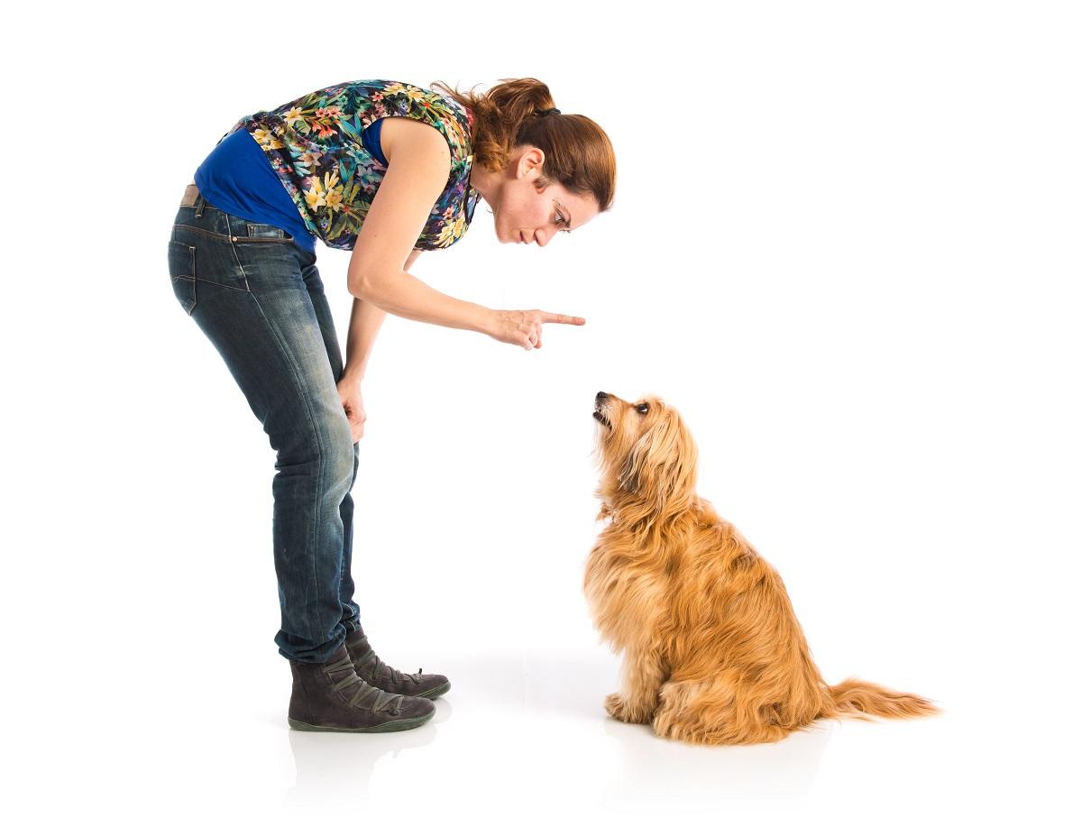 cachorro pode comer ração de gato 6