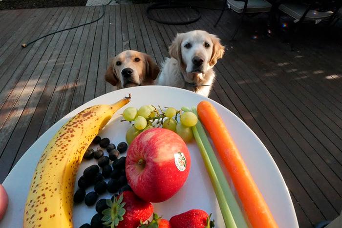 frutas que cachorro pode comer 4