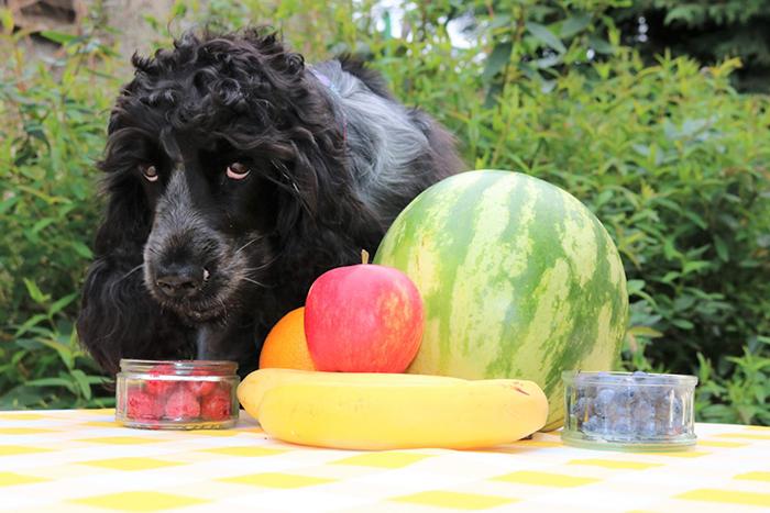 frutas que cachorro pode comer 3