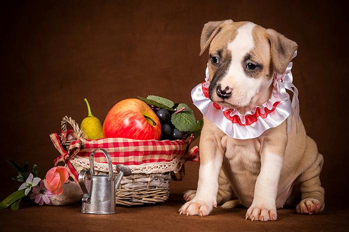 frutas que cachorro pode comer 2