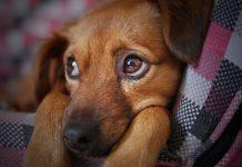 alimentos proibidos para cachorro (6)
