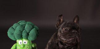 cachorro pode comer brocólis 01