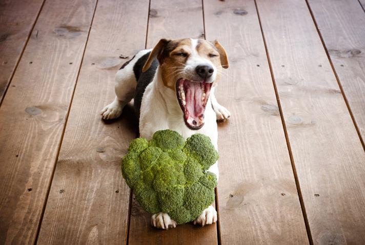 cachorro pode comer brocólis 03