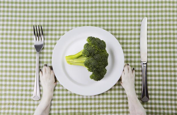 cachorro pode comer brocólis 02