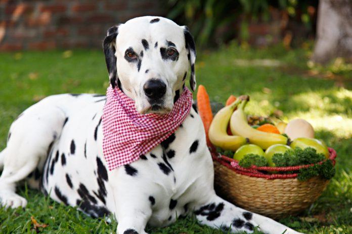 frutas para cachorro 2