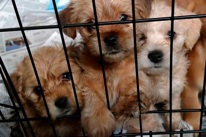 adotar um cachorro 3
