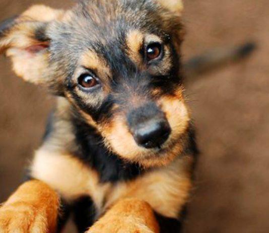 adotar um cachorro 6