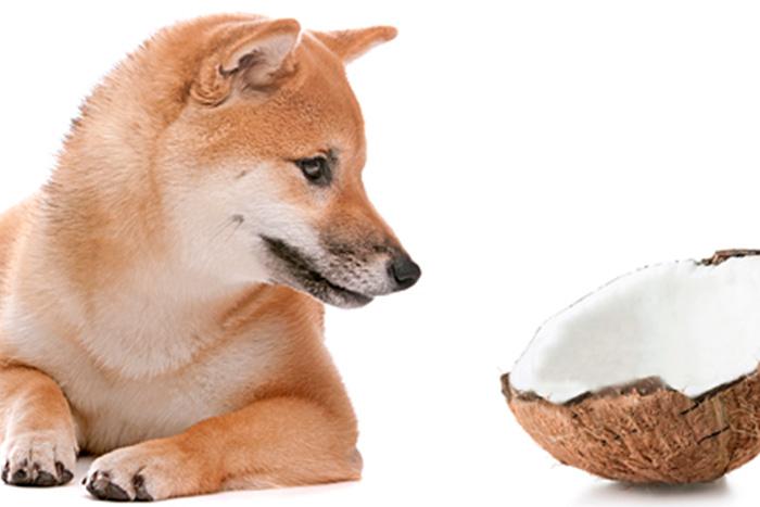 cachorro pode comer coco 2