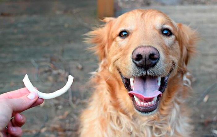 cachorro pode comer coco 5