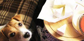cachorro pode comer queijo 3