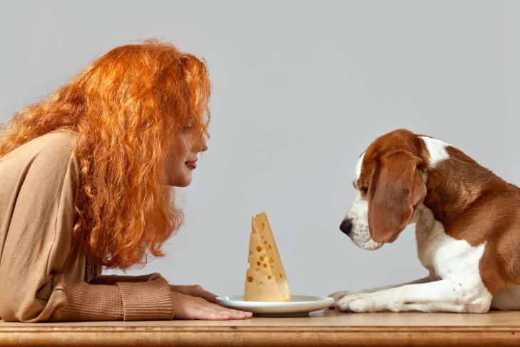 cachorro pode comer queijo 4