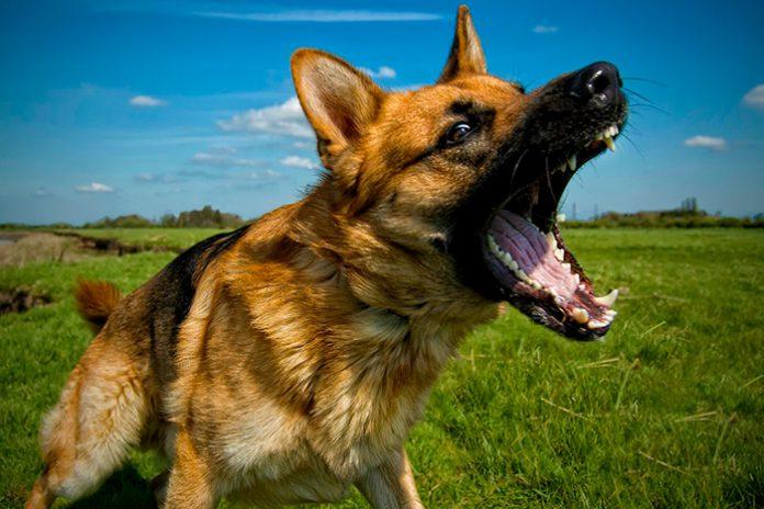 cachorro latindo 1