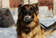 raiva canina 3