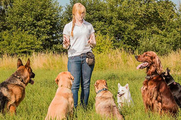 como começar o adestramento de cães 1