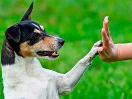como começar o adestramento de cães 2