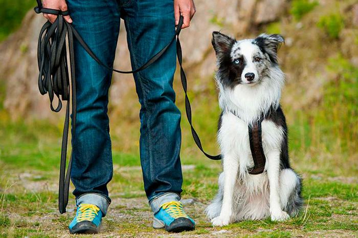 como começar o adestramento de cães 3