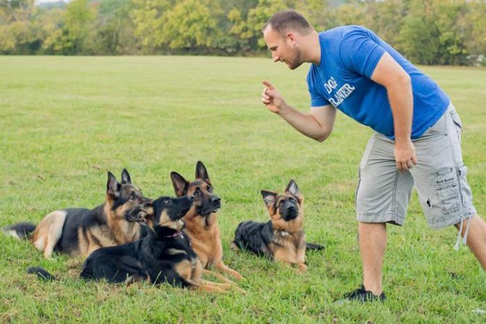 como começar o adestramento de cães 4