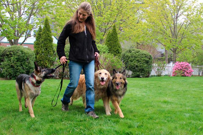 como começar o adestramento de cães 6