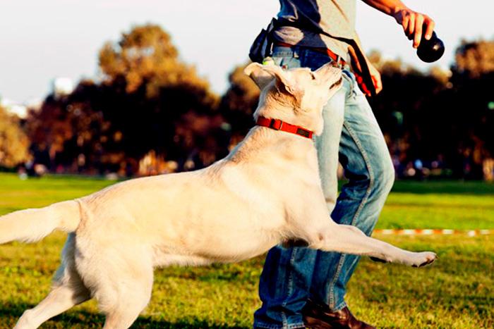 como começar o adestramento de cães 7