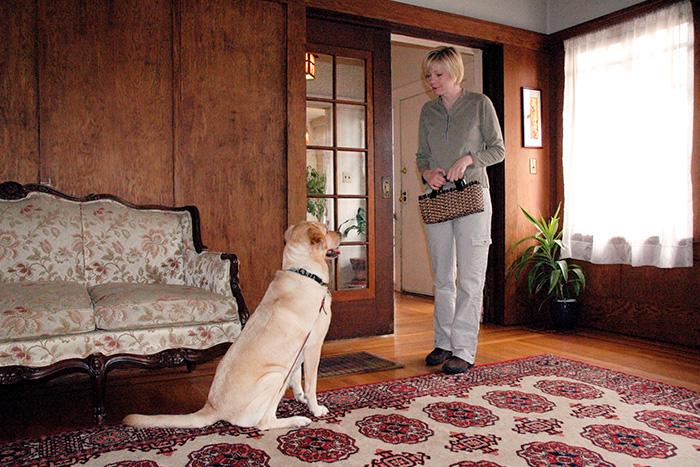 como fazer o adestramento de cães em casa 1