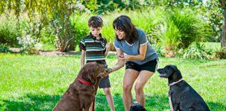 como fazer o adestramento de cães em casa 2