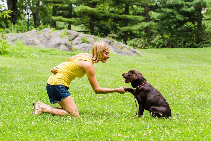 como fazer o adestramento de cães em casa 3